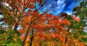 Fall-Colored-Leaves-FB-300x158