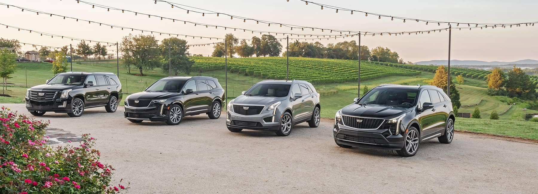Four Cadillacs Lined up in a row