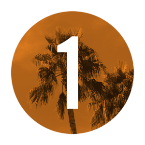 1 Palm
