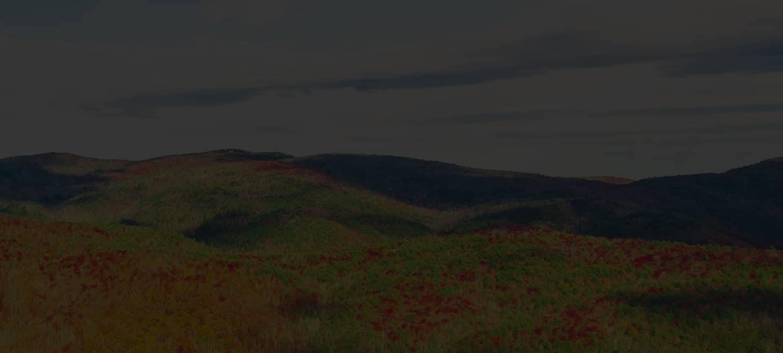 Everett Cadillac landscape