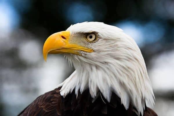 American Eagle Profile mobile