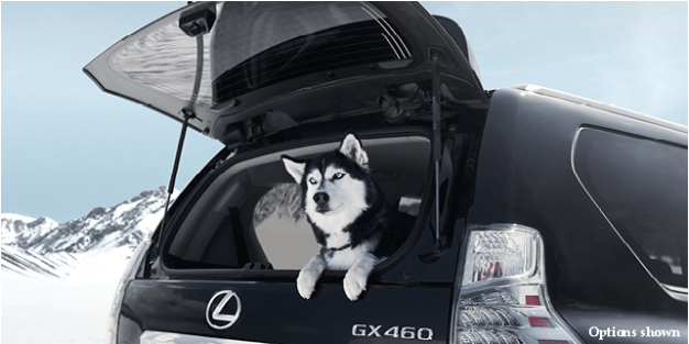 Lexus and Pets