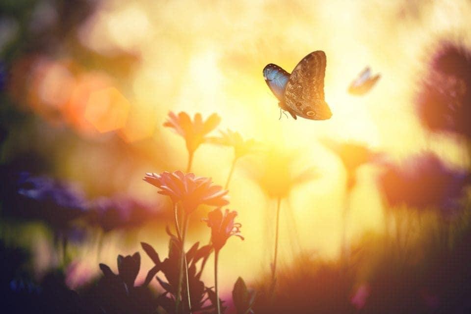 Sunny-Butterfly