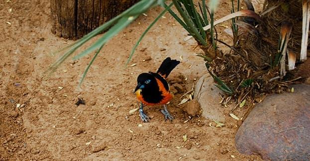 El-Paso-Zoo